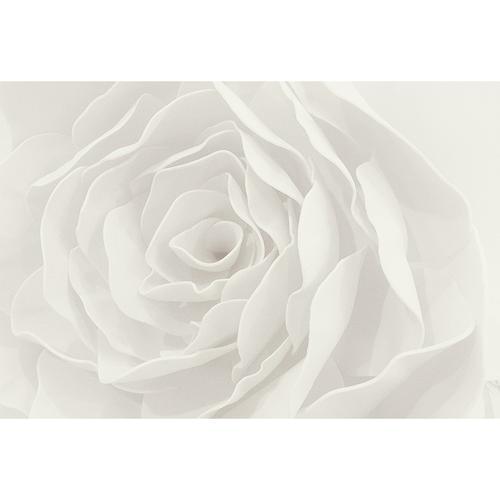客厅电视墙壁画卧室无缝墙纸北欧温馨白色玫瑰定制壁纸画(459) 白玫瑰